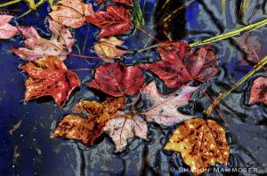 Leaves make great subjects!