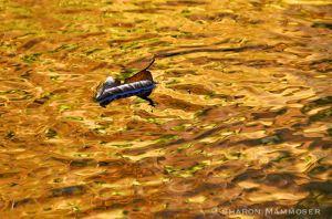water--2.jpg