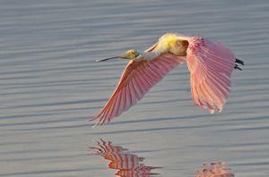 4birds--2.jpg