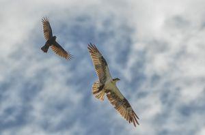 4birds--5.jpg