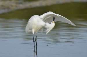 4birds-1269.jpg