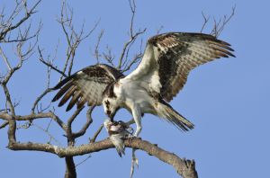 4birds-1526.jpg