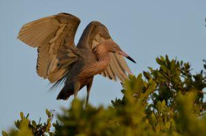 4birds-1792.jpg