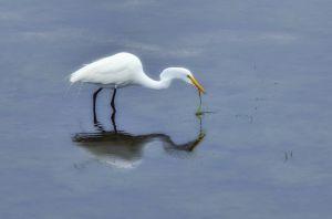 Birds--11.jpg