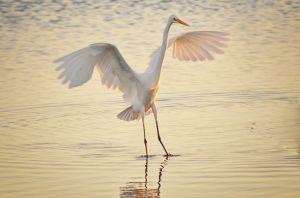 Birds--2.jpg