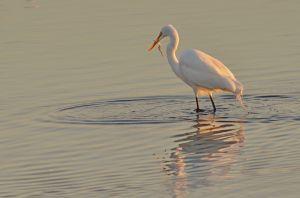 Birds--3.jpg