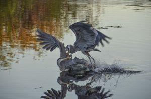 Birds--7.jpg