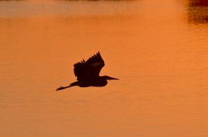 Birds-.jpg