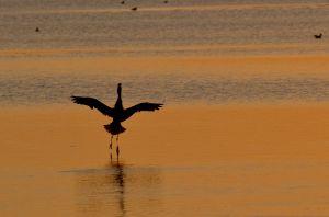 Birds-7270.jpg