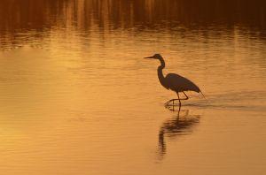 Birds-7332.jpg