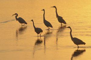 Birds-7364.jpg