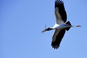 stork-0579.jpg