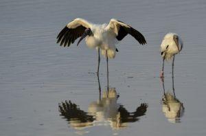 stork-2.jpg