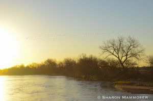 Sunrise on the Platte River