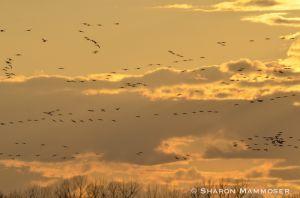 Flocks in the sky