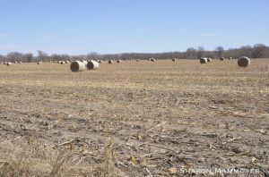 Typical daytime habitat in Nebraska