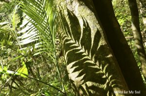 Fern in Costa Rica