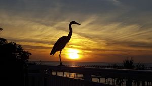 Heron and Sunset by Lloyd, Florida