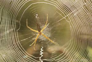 A round spider's web