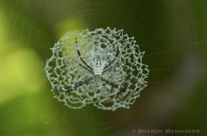 Round center of spider web