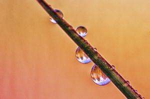 water--19.jpg