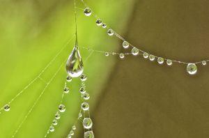 water--21.jpg