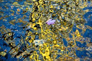 water--26.jpg