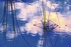 water--27.jpg