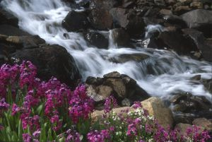 water-0005.jpg