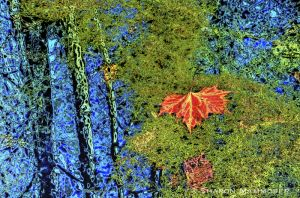 leafmoss-.jpg